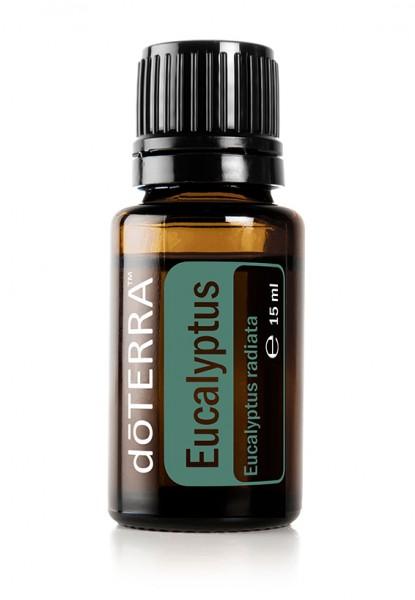 Eukalyptus (Eucalyptus radiata)